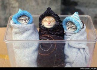 Trzy kotki zawinięte w kocyk
