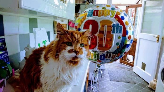 Rudy kot z balonem obok