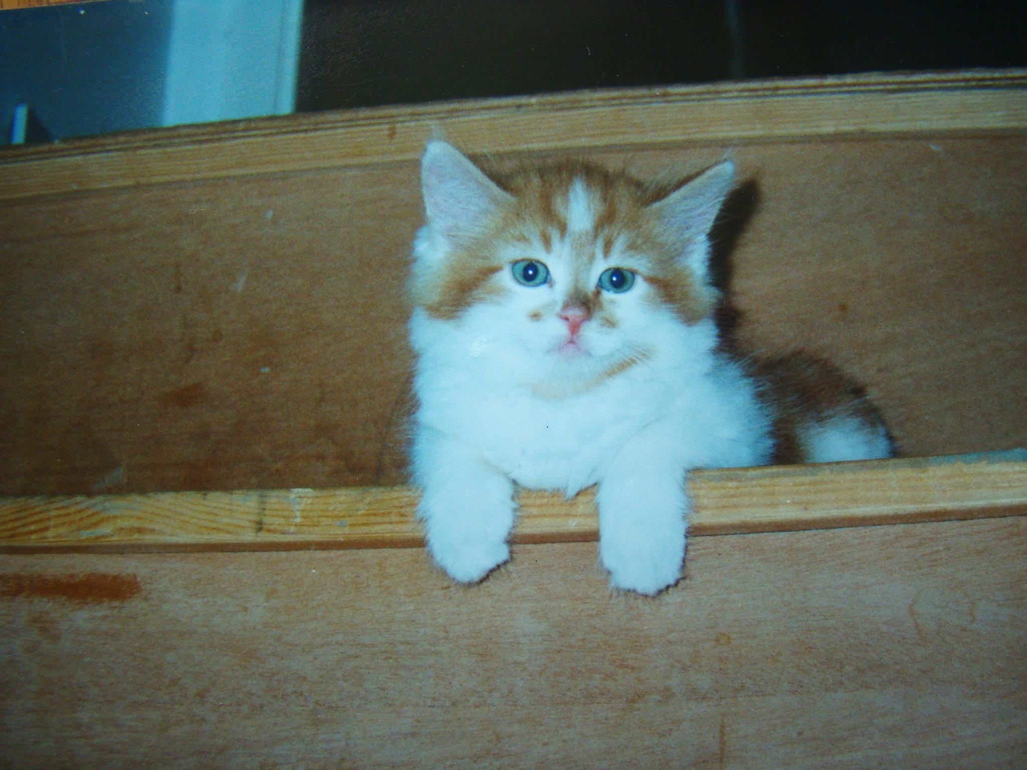 Mały kociak na schodach