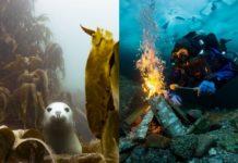 Foka pod wodą i mężczyzna rozpalający ognisko pod wodą