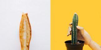 Tost z serem i kaktus, który jest trzymany przez drewnianą rękę