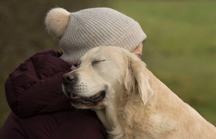 dziewczynka w zimowej czapce przytula dorosłego kremowego labradora