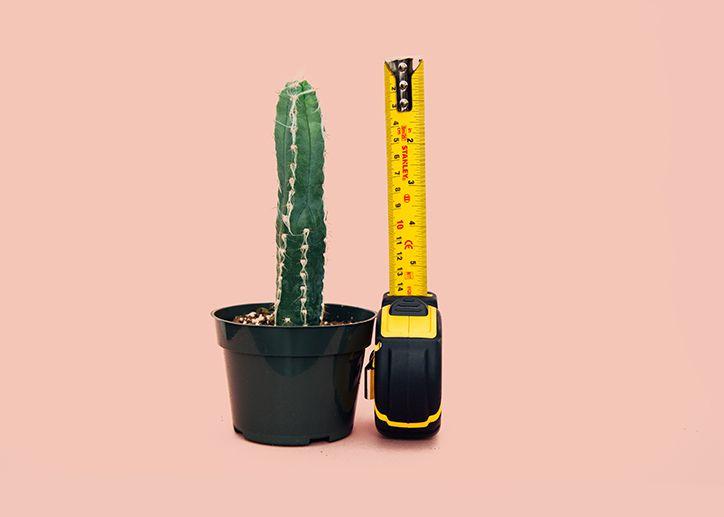 Kaktus z miarką obok