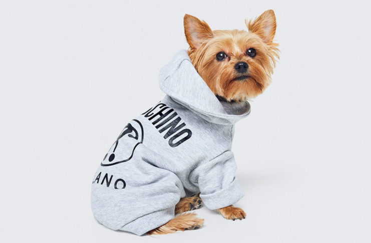 Pies z szarej bluzie