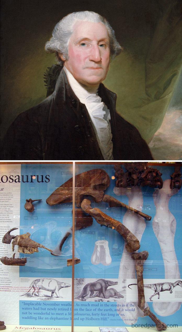 Portret męzczyzny i kości dinozaurów