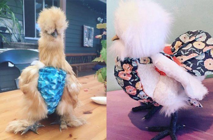 Dwa kurczaki w majtkach