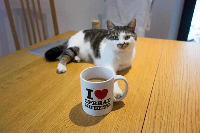 kot leżący na stole, przed nim kawa