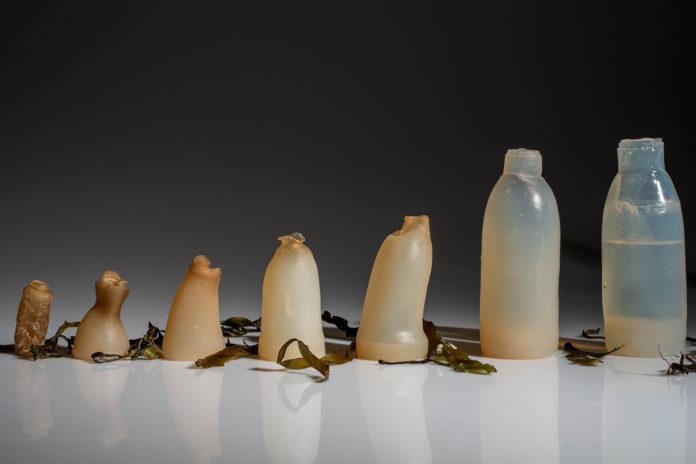 na zdjęciu znajdują się poszczególne etapy rozkładu butelki