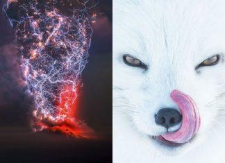 Zdjęcie burzy i twarzy wilka