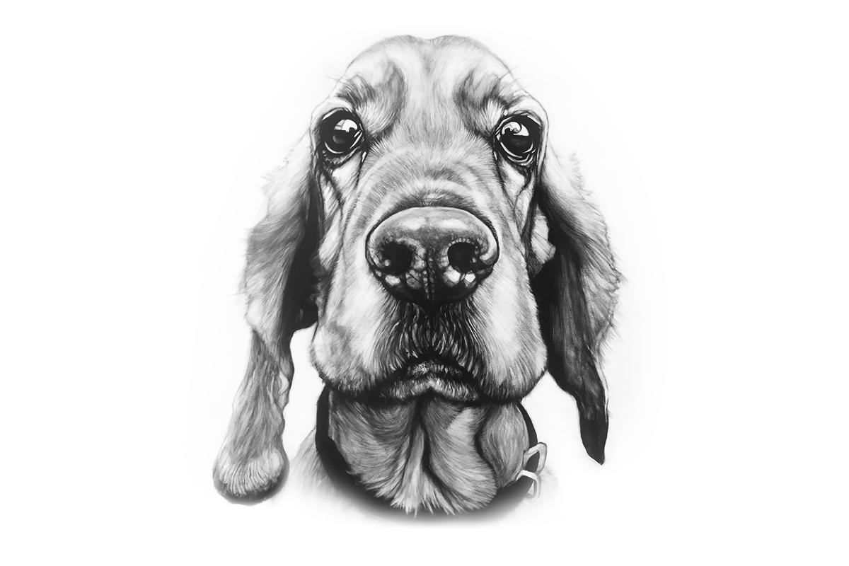Portret jamnika