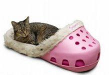 Różowy but typu crocs, wypełniony futerkiem. W środku leży kot