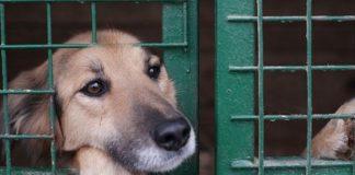 Pies za siatką w schronisku