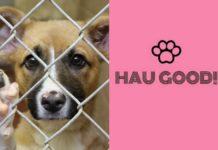 Pies za siatką i logo hau good