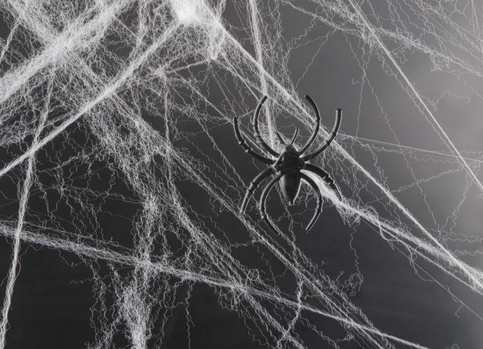 Pajeczyna z pająkiem