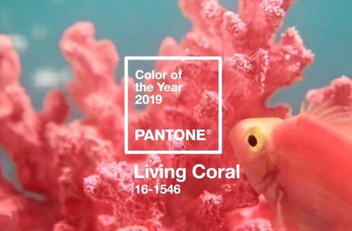 Kolor roku Pantone 2019