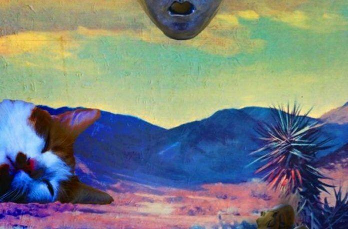kolorowa pustynia, kot, palma, odcięta głowa