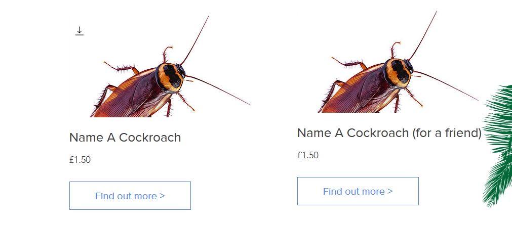 Zrzut ekranu ze strony, gdzie można nadać karaluchowi imię