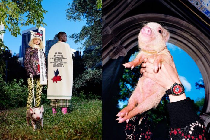 Dwoje ludzi w ubraniach Gucci i świnka na rękach