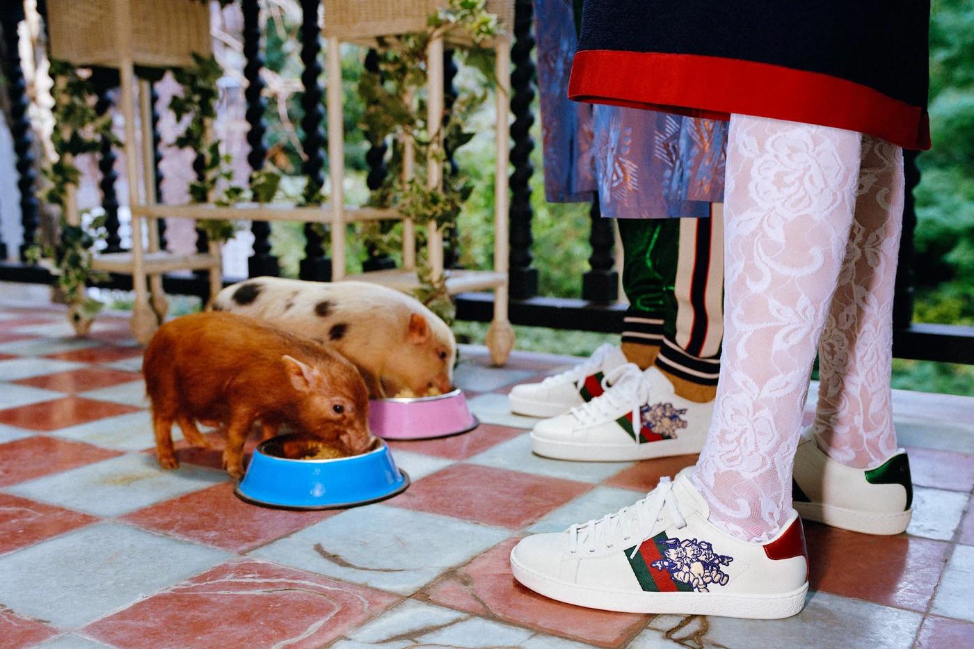Świnki jedzące z miski i nogi dwójki ludzi