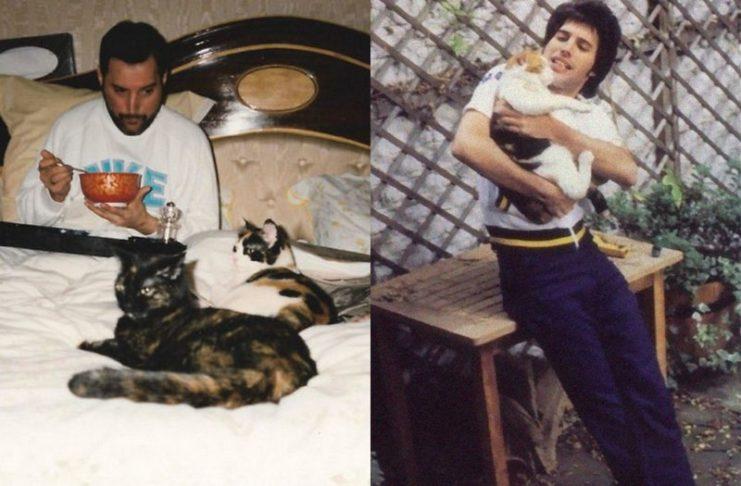 Mężczyzna w łóżku z kotami i mężczyzna trzymający kota na ręku