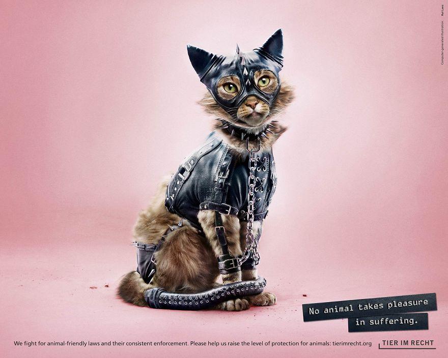 Kot w stroju BDSM