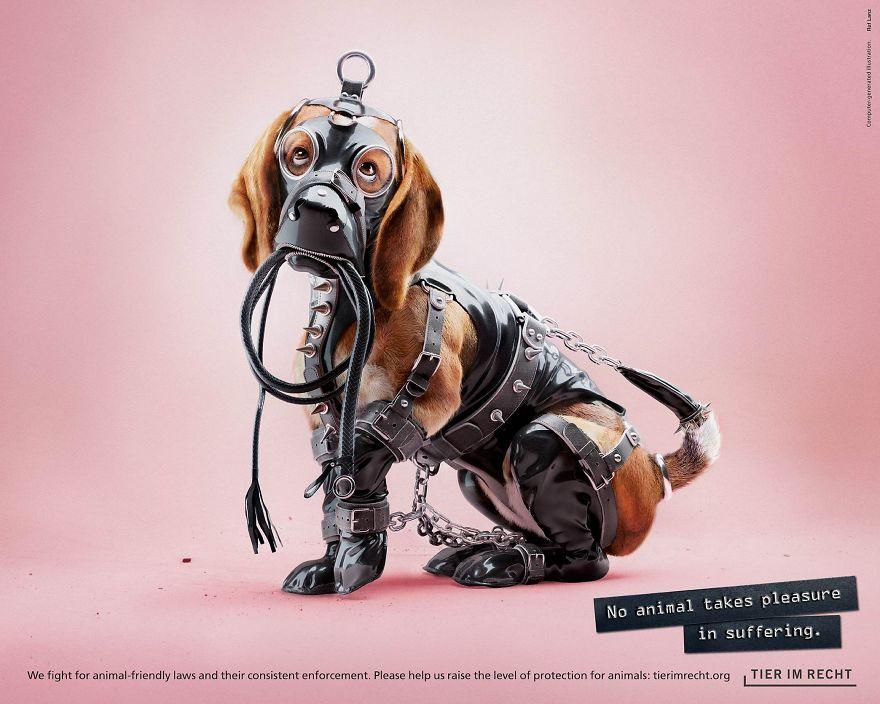 Pies w stroju BDSM