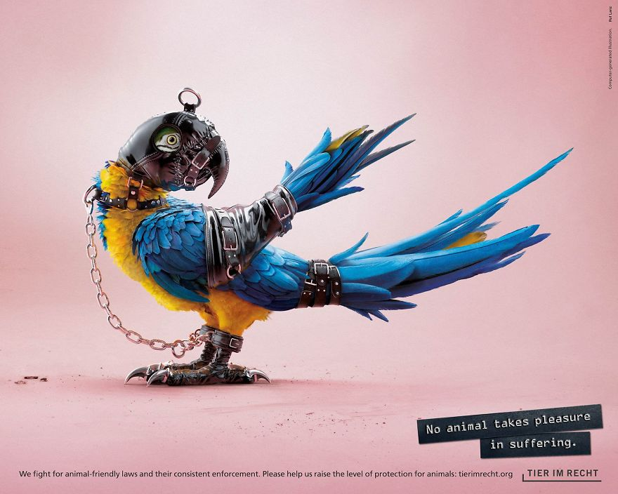 Papuga w stroju BDSM