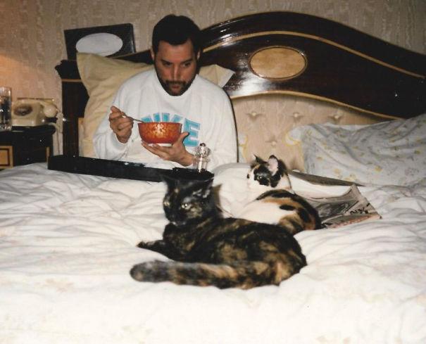 Mężczyzna z kotami w łóżku