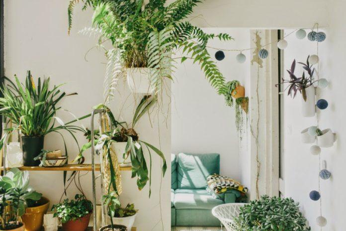 Rośliny w mieszkaniu