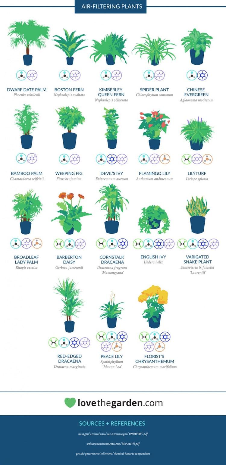 Lista roślin oczyszczających powietrze w mieszkaniu