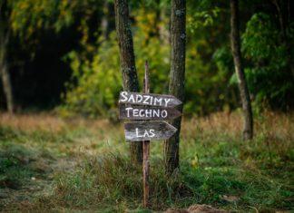 Kierunkowskaz Sadzimy Techno Las w środku lasu
