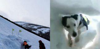 Pies ratujący człowieka spod śnieżnej zaspy