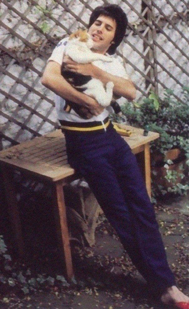 Mężczyzna z kotami