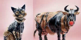 Kot i krowa w strojach BDSM
