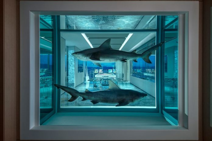 Dwa rekiny