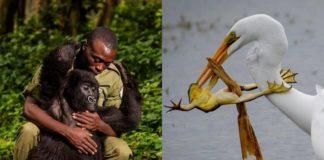 Mężczyzna przytulający małpę i ptak łapiący żabę
