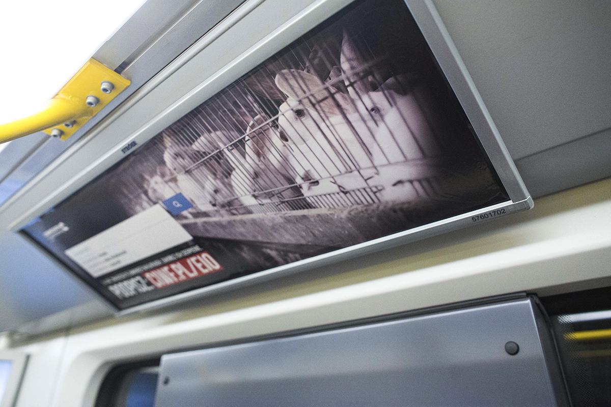 Plakat przedstawiający króliki w klatce w warszawkim metrze
