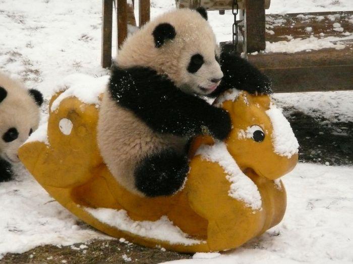 Panda na bujanym koniku