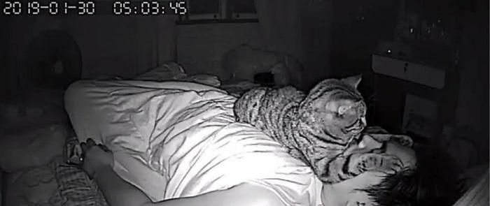 Kot lezący na właścicielu