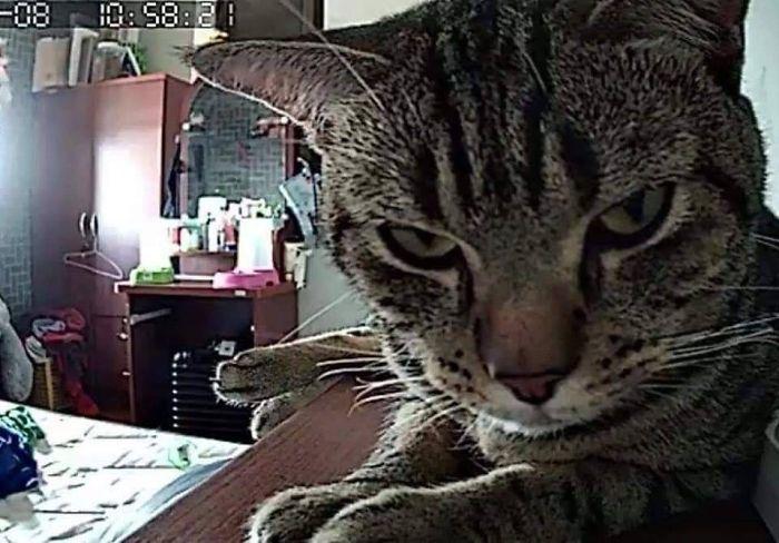 Kot patrzący w obiketyw kamery