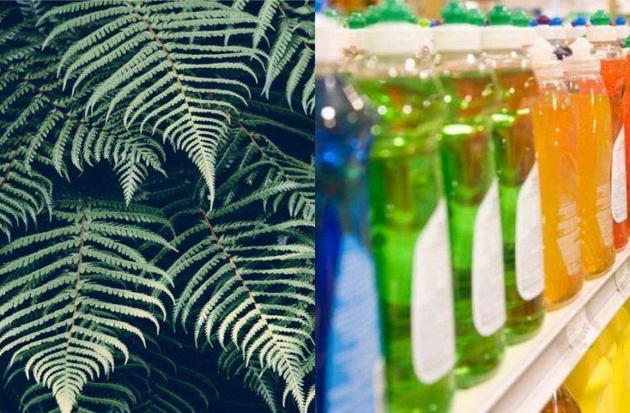 Liście paproci i butelki w sklepie