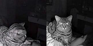 Dwa kadry przedstawiające kota lężacego na meżczyźnie