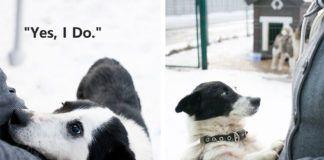 Dwa zdjęcia przedstawiające psy