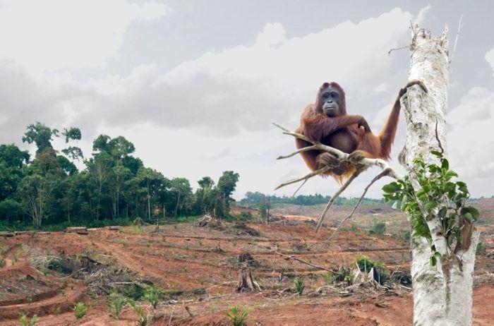 małpka siedząca na pojedyncze gałęzi wśród wyciętego lasu