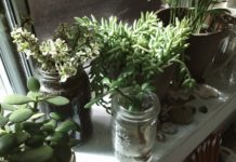 Rośliny w słokach
