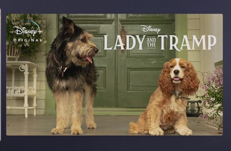 Dwa psy siedzące przed domem