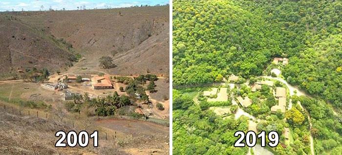 Dwa zdjecia: jedno czarno-białe przedstawiające wyjałowiony teren i drugie, przedstawiające bujny las w tym samym miejscu