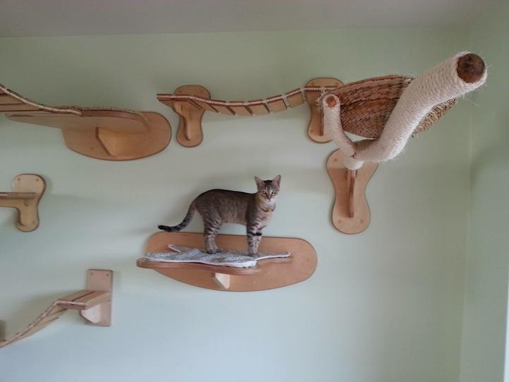 Kot na podwieszanej półce