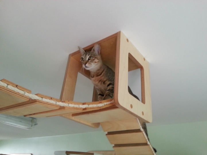 Plac zabaw dla kotów