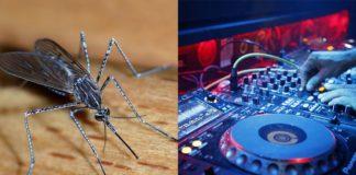 Zdjęcie przedstawiające komara i kontroler DJski